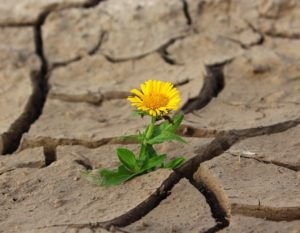 flower growing from a crack in dry earth