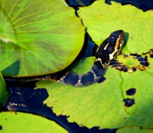 Water serpents rising from the water (how to deal with change)