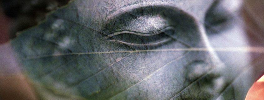 buddha shining through a leaf (Unity Consciousness)